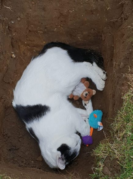 Diaz final resting